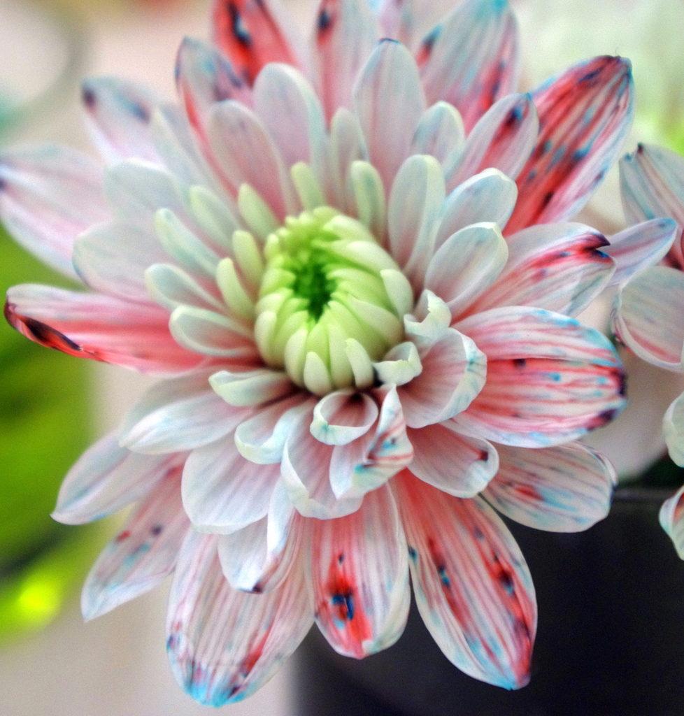 Окрашенный цветок