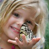 Основы эстетического воспитания и развития детей дошкольного возраста