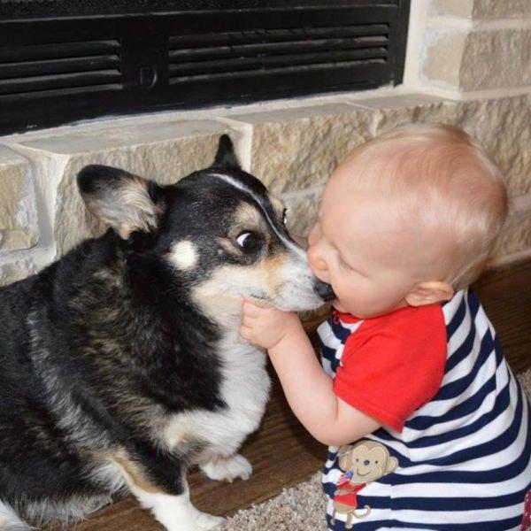 Укусы собаки