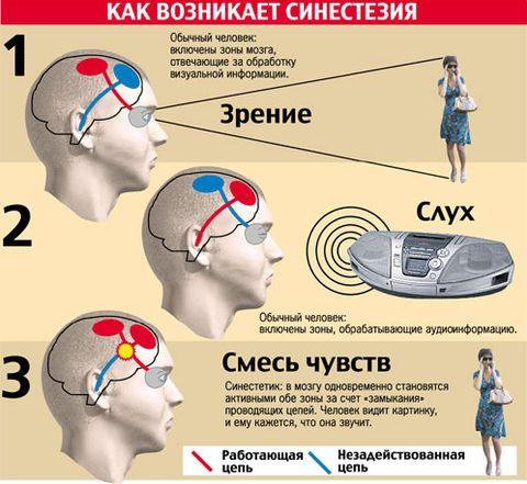 Механизм синестезии