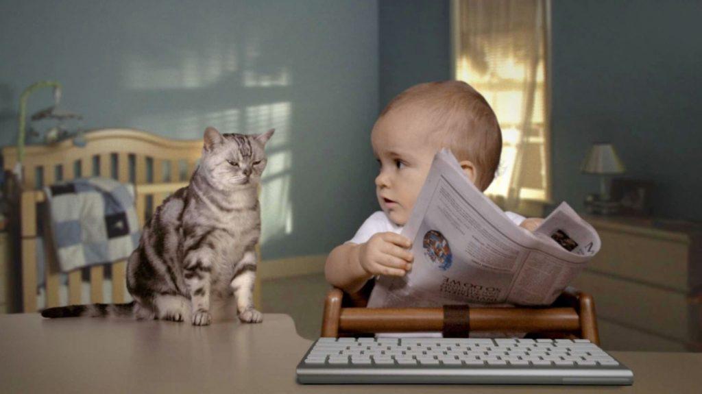 Домашний питомец - кошка