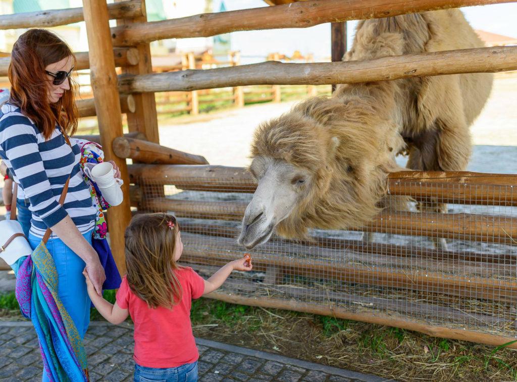 Посещение зоопарка с мамой