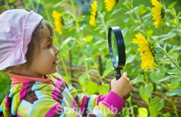 Наблюдение за миром ребенком