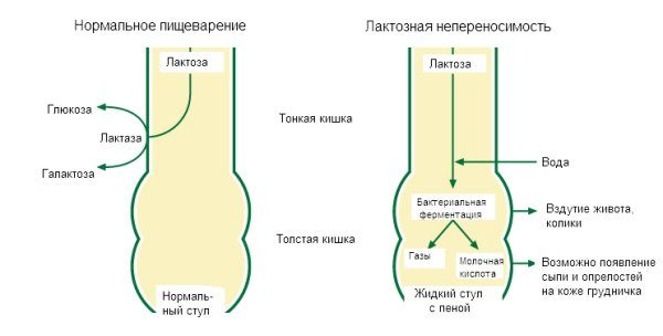 Проявления и механизм