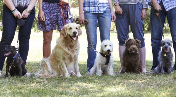 Как выбрать ветеринарную клинику в Москве