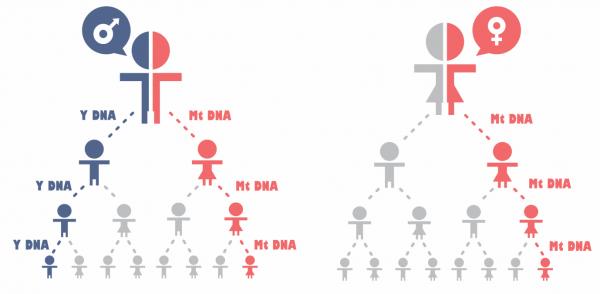 Генетическая генеалогия