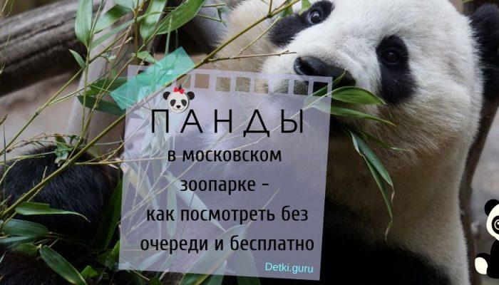 Панды в московском зоопарке — как посмотреть без очереди и кто может посмотреть  бесплатно