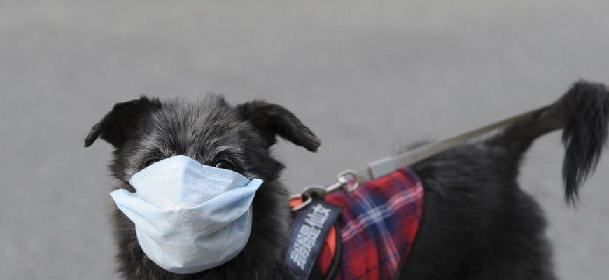 Собака в маске