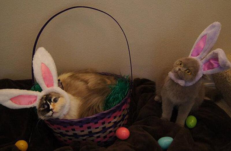 Пасхальные котики и один пес - 26 забавных фото