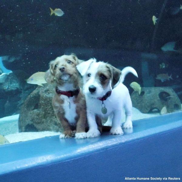 Песики в аквариуме