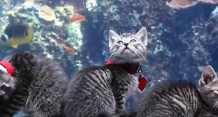 Котики и рыбки