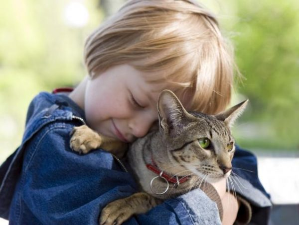 Забота о кошке