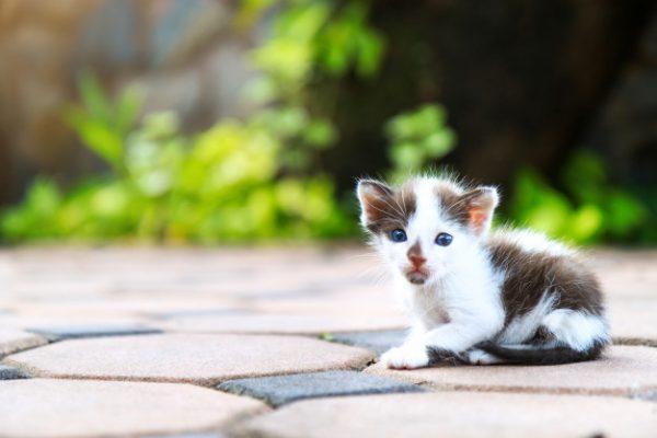 бродячий котенок