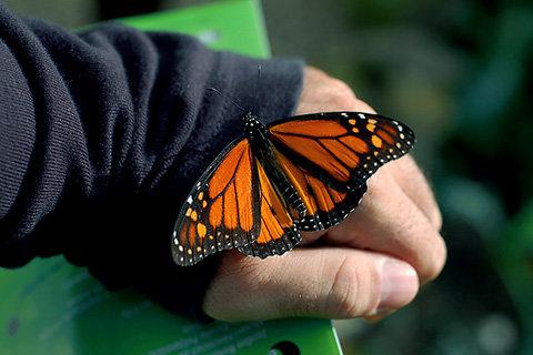 Пример бабочки