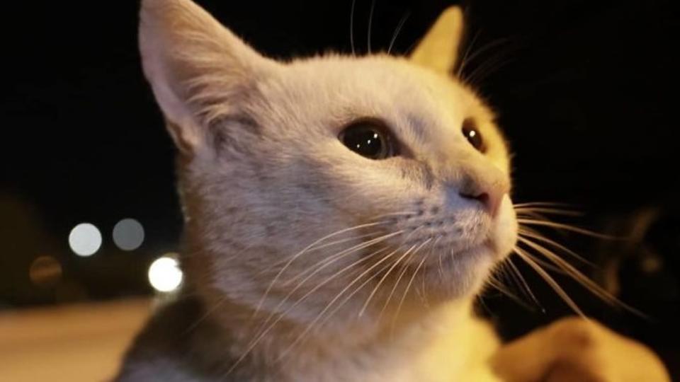Голодный блохастый кот попросил у девушки еды. Теперь у него есть дом и любимая хозяйка