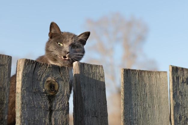 кот ухмыляется