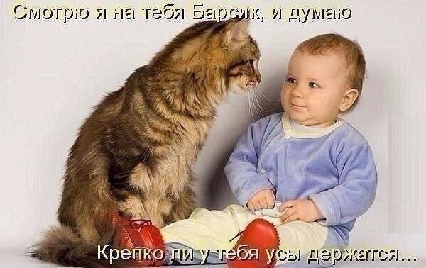 Самая сладкая парочка Интернета - дети и котики да еще с веселыми комментами