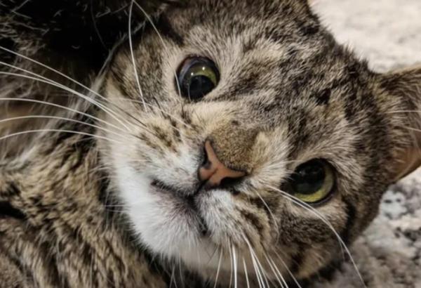 История Мурчика — благочестивого солнечного котика