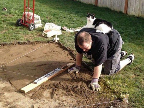 33 фото котиков, которые освоили человеческие профессии и очень ответственно относятся к работе
