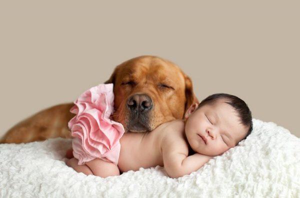 Новорожденный ребенок и собака
