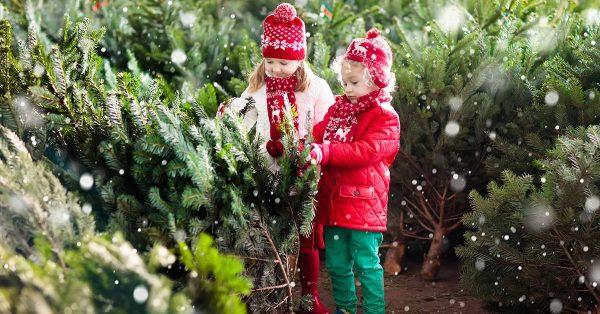 Дети выбирают елку