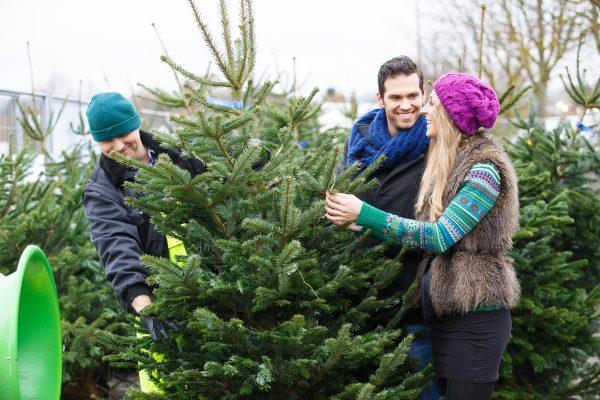 Семья выбирает новогоднюю елку