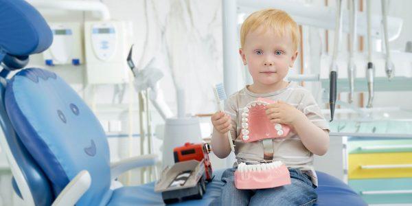 Малыш играет с муляжом ротовой полости