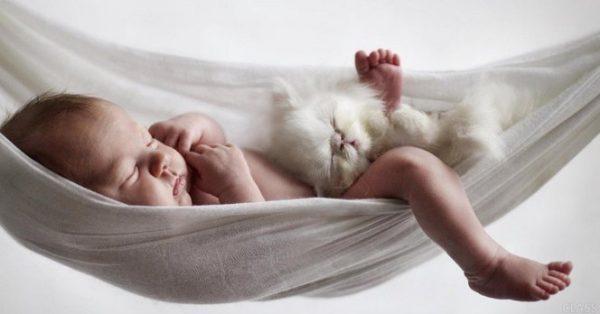 Появление малыша в семье с котом
