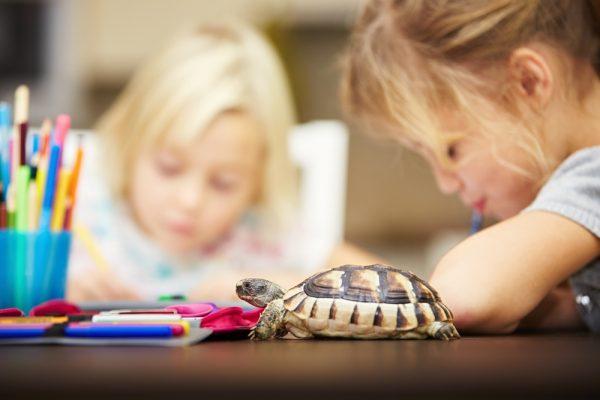 Дети и черепаха