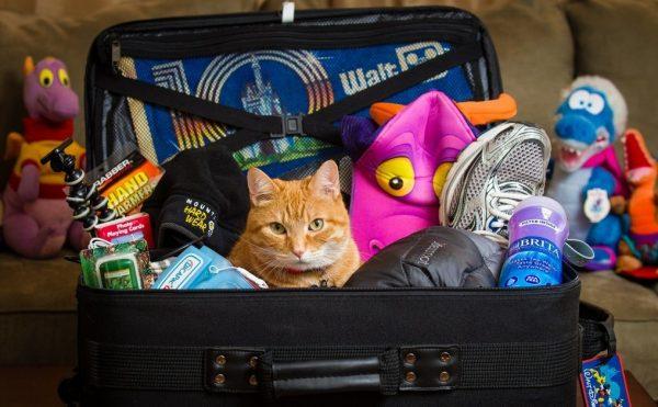 чемодан с игрушками и котом