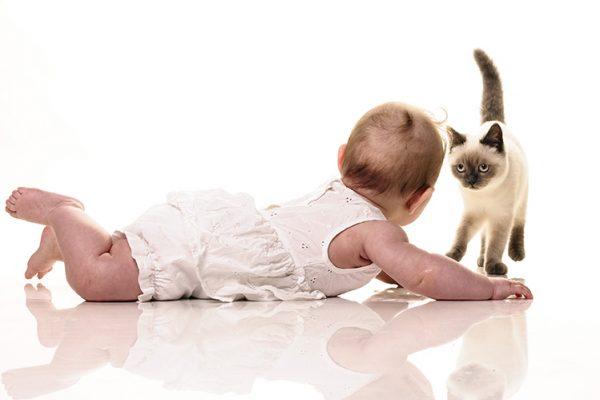 Знакомство кота с малышом