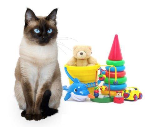 Коты - те же дети, очень любят играть