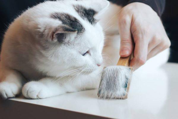 Кот и щетка для вычесывания