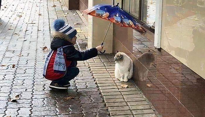 Ребенок закрывает кошку от дождя