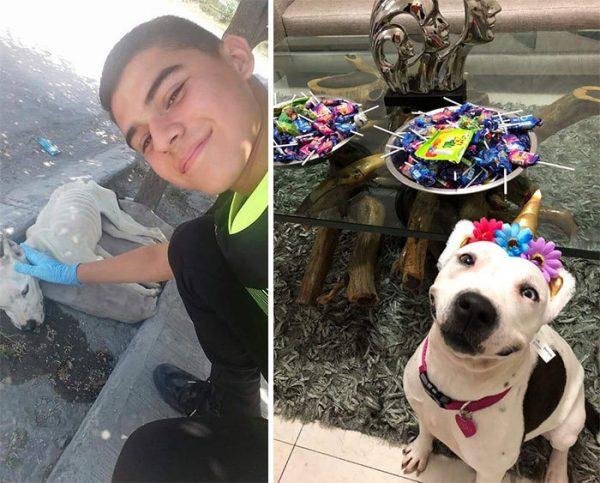 Мальчик спас собаку и выходил ее