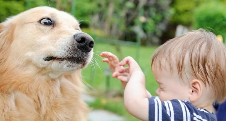 Ребёнок боится собак