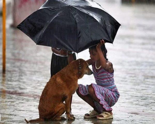 Девочка укрывает зонтиком бездомного пса, чтобы тот не промок