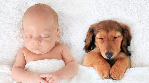 Ребенок спит с собакой