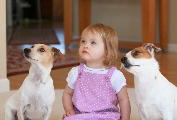 малышка и собаки