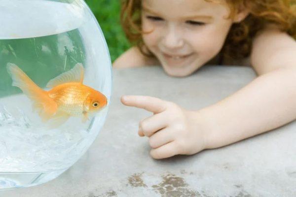 Домашние животные: если просит ребенок, кого лучше выбрать и зачем