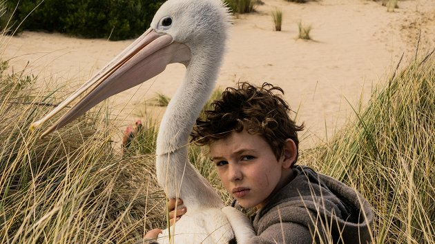 Baby and pelican