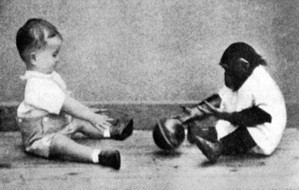 Сын ученого и детеныш шимпанзе играют в мяч