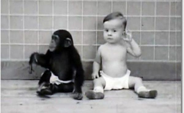 Сын Уинтропа Келлога и детеныш шимпанзе