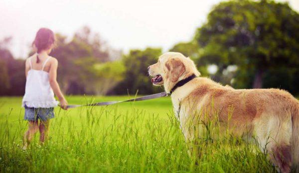 девочкадевочка с собакой