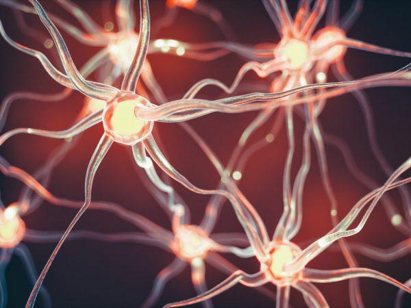 Советы нейрохирурга, как развивать свой мозг, чтобы он работал до глубокой старости, как у молодого человека